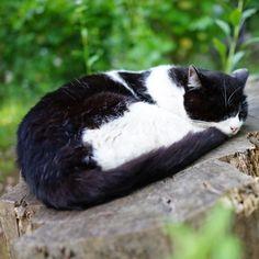 «zoo zoo zoo... #猫#ネコ#ねこ#にゃんこ#ニャンコ#cat #cats#ねこ部#ねこら部分#ぬこ#neko#neco#catsinstagram#animal #katze#cute#kitty#japan#江ノ島#enoshima#bff#nyanko#love»