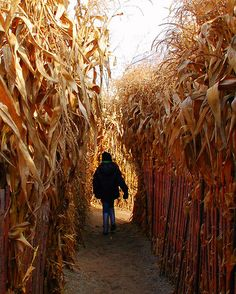 Corn Maze...love to do these in October. We go to a scary corn maze towards the end of October, it's very creepy!
