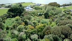 Exploring a beautiful 23 year old food forest in New Zealand (Video) Forest Garden, Forest Plants, Garden Path, Dream Garden, Permaculture Design, Permaculture Principles, Forest Design, Organic Gardening, Vegetable Gardening