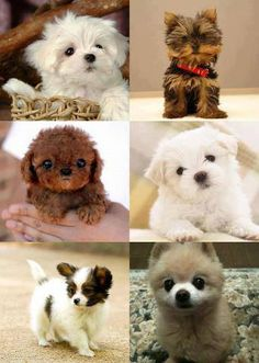 "Cute Puppys -  ""Can they all be my friends?"" --munson   ...........click here to find out more     http://googydog.com"