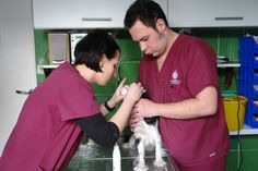 vets,veterinary technician,team,veterinary,poland,vet clinic,animals,klinika dla zwierząt,dog