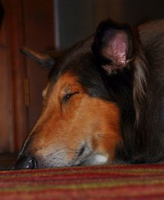 It's been a collie kind of day.