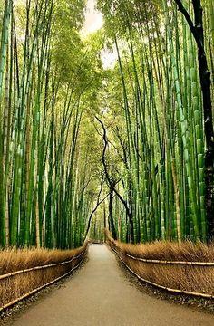 Bamboo Forest, Hawaii by MyohoDane