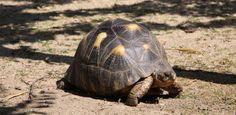 """Auf Korsika gibt es 2 sehenswerte Schildkrötenfarmen. Die kleinere Farm """"Le Village des Tortues"""" befindet sich im Asco-Tal, die größere Farm """"A"""
