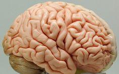 Experiment - Wie das Gehirn mit dem Älterwerden umgeht - http://ift.tt/2cHknR3