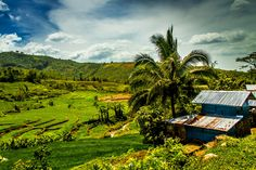 Terraced rice fields enroute to Maa-o Negros Occidental Bacolod City, Some Pictures, Philippines, Fields, Rice, Travel, Buenos Aires, Black, Viajes