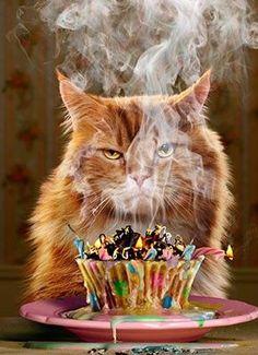 Grumpy Cat with Cupcake Birthday Card - Modern Provisions