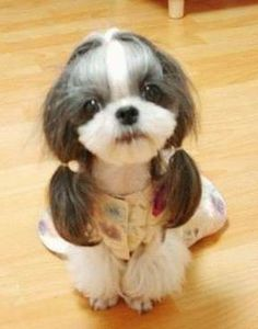 A dog in a dress and pigtails...hmmm. I need a small dog!