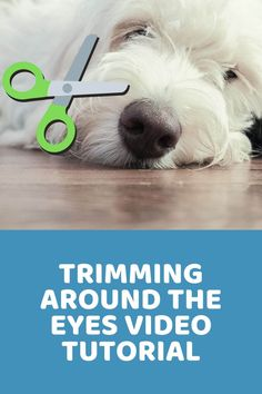 Goldendoodle Grooming, Dog Grooming Tips, Poodle Grooming, Havanese, Goldendoodles, Cockapoo Rescue, Goldendoodle Haircuts, Cavapoo Puppies, Labradoodles