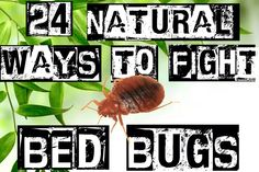 This site is awesome http://organicpestcontrolnyc.com/how-to-get-rid-of-bed-bugs-naturally/