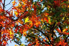 Watercolor effect fall leaves