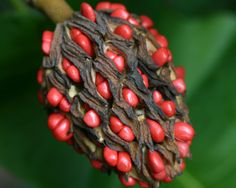 new ideas for fruit pattern photography seed pods Planting Seeds, Planting Flowers, Plant Fungus, Pattern Photography, Fruit Pattern, Seed Pods, Natural Forms, Macro Photography, Organic Gardening