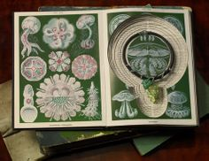 Jewelry in a cut book... very cool and unique!