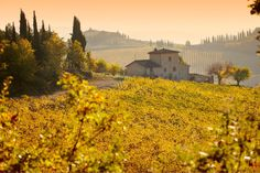 50 natural destinations which should always be fall - The Tuscany (Italy): golden vineyards and forests of beech