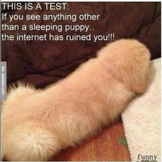This is a Test: If you see anything other than a sleeping puppy... the internet has ruined you !!!