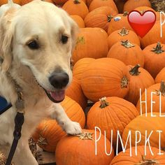 Hello #pumpkin October 1st is already here! Who is ready for cooler weather?