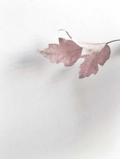 What if winter is not a place outside? Rose Pastel, Pale Pink, Pink Grey, Plum Purple, Soft Autumn, Autumn Leaves, Bokeh, Dusty Rose, Color Themes