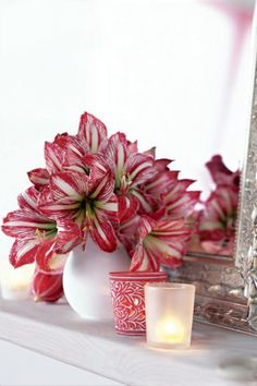 Red and White Christmas decorating theme  - Christmas Lillies