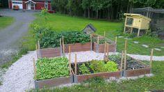 Hagen på Fjellberg....: 23.jun.2013
