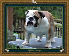 Topline Bulldogs - Raleigh, NC