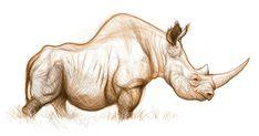 Rhino - Sketch - Jason Seiler Animal Sketches, Animal Drawings, Art Sketches, Stone Age Animals, Rhino Tattoo, Animal Humour, Creature Drawings, Sketch Inspiration, Rhinoceros