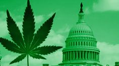 The High Of 2016 – Marijuana Legalization Quietly Goes Global