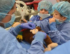 Teddy bear surgery a hit, as usual, at vet school open house
