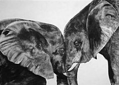 WIldlife Charcoal Art - transitional - Drawings And Illustrations - Seattle - Living Tones Fine Art