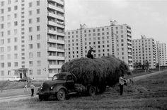 Улица Удальцова, дома 16, 14, 12, 10. 1967 год.