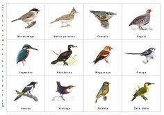 Bergamott: Itthon telelő madarak II.