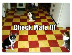 hahaha cats beat dogs!