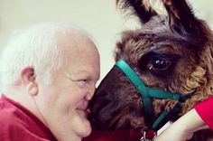 Photos of Heartwarming Interactions Between Therapy Llamas and Elderly Patients Animals Beautiful, Cute Animals, Intimacy Issues, No Rain, The Fox And The Hound, Tears Of Joy, Make Me Smile, Are You Happy, Your Dog