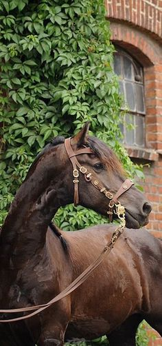 Very handsome horse, great photography, gentlemanly looking estate with trimmed hedges, over all great pic!