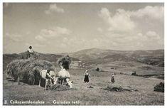 Csikszentdomokos:széna rakás a Garados Old Photography, Folk Music, Hungary, Budapest, Monument Valley, 1, Traditional, History, Nature
