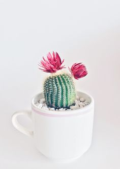 Did you know that a coffee mug makes a great vessel for a succulent or a small cactus? We like to se. Did you know that a coffee mug makes a great vessel for a succulent or a small cactus? We like to see that sometimes super easy = super cute Prickly Pear Cactus, Green Cactus, Cactus Planta, Cactus Y Suculentas, Image Cactus, Mini Plantas, Cactus Pictures, Fiddle Leaf Fig Tree, Cacti And Succulents