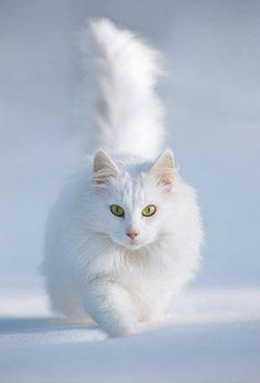 This looks just like my sisters cat, except that he's orange & white. He loved the snow too! {༺♥Winter Wonderland♥༻}