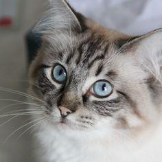 """Cat"" by Michael Renton on Picfair"