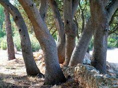 Edu Gallego (@Caganios) | Twitter Oak trees in Torre Tallada #FontdelaFiguera #Valencia #Spain #paisajes #landscapephotography #landscape