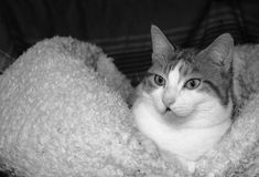 Image by Loreta Tavoraite on YouPic Canon Ef, Eos, Animals, Image, Animaux, Animales, Animal, Dieren