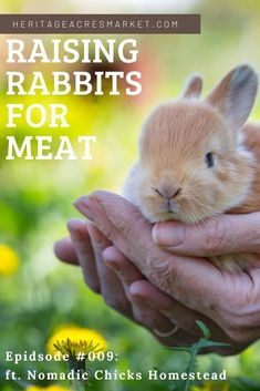 Join Nicole and Audra, owner of Nomadic Chicks Homestead, as they discuss everything you need to know about starting a rabbitry for meat and show rabbits.  WHAT YOU'LL LEARN  How to choose your first rabbits  Housing and feed requirements  Processing rabbits for meat  Breeding rabbits    #rabbits #hobbyfarm #farm #backyard #backyardfarm Meat Rabbits Breeds, Raising Rabbits For Meat, Raising Farm Animals, Rabbit Breeds, Backyard Farming, Chickens Backyard, Show Rabbits, Sustainable Farming, Rabbit Hutches