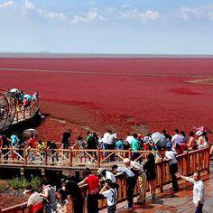 > Las costas del mar en #China se pusieron color rojo hace unas horas
