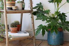 How-to-display-indoor-plants-9