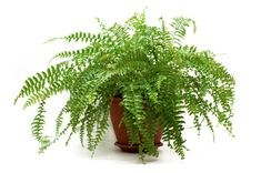 5 Indoor Plants That Absorb Humidity In Your House Specialists say the Boston fern is the best natural weapon in the fight against mold, purifying the air of toxins. This plant has an important decorative role, bringing an exotic air into your interiors. Bathroom Plants, Bathroom Colors, Country Style Bathrooms, Types Of Ferns, Boston Ferns, Indoor Vegetable Gardening, Urban Gardening, Container Gardening, Home Air Purifier