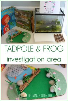 Set up a fun and hands on way to learn about nature with this tadpole and frog investigation area! Scientific observation and exploration for kids.