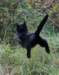 The flying kitty!