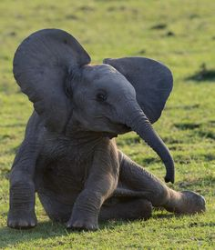 beautiful-wildlife: Do I look pretty?byBarbara Arstall Masai...