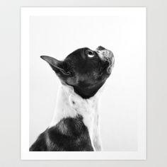 Boston Terrier Profile Art Print by ShermanPhotography - 28x34 $60.00