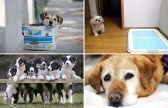 50 fascinating facts about your dog - Vadim Ghirda, File/AP Photo; Bloomberg News/Charles Pertwee; Kimimasa/REUTERS; Richard Austin/Rex Fe...