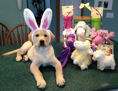 WelcomePup.com has what you need for your dog's Easter basket.  www.WelcomePup.com.