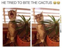 he tried to bite the cactus